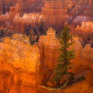 Tree and Hoodoos (Bryce N.P.)