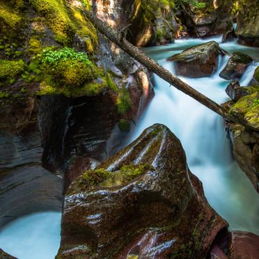 Avalanche Creek (Glacier N.P.)