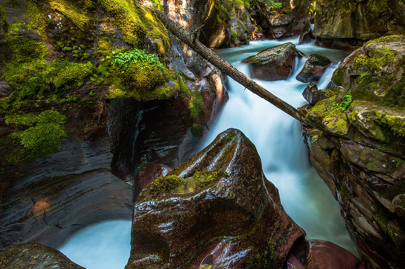 Avalanche Creek (Glacier N.P.)