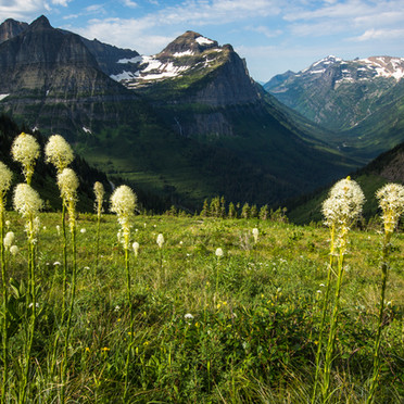 Bear Grass and Bird Women Falls (Glacier N.P.)