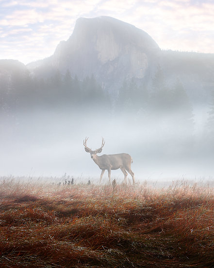 Half Dome with Fog and Deer
