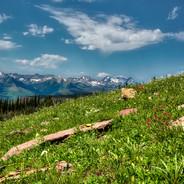 Highline Trail Hiker (Glacier N.P.)