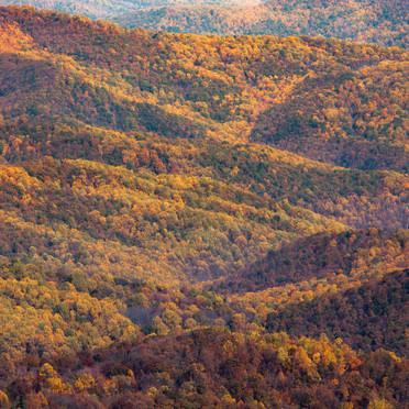 Shenandoah Autumn Burst