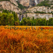 Yosemite Falls Autumn Color (Yosemite N.P.)