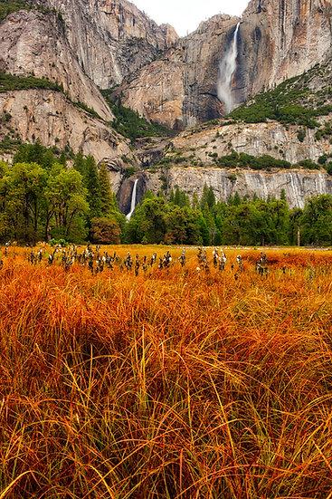 Yosemite Falls Autumn Color (Yosemite N.P.)