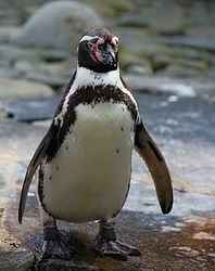Penguin - PK Cottages