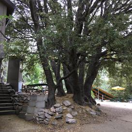 Trees by O Build.JPG