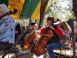 Cellos 3.jpg