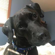 Leia has my heart! #dog #labmix #instado