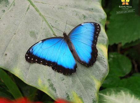 Le case delle farfalle, Butterfly House