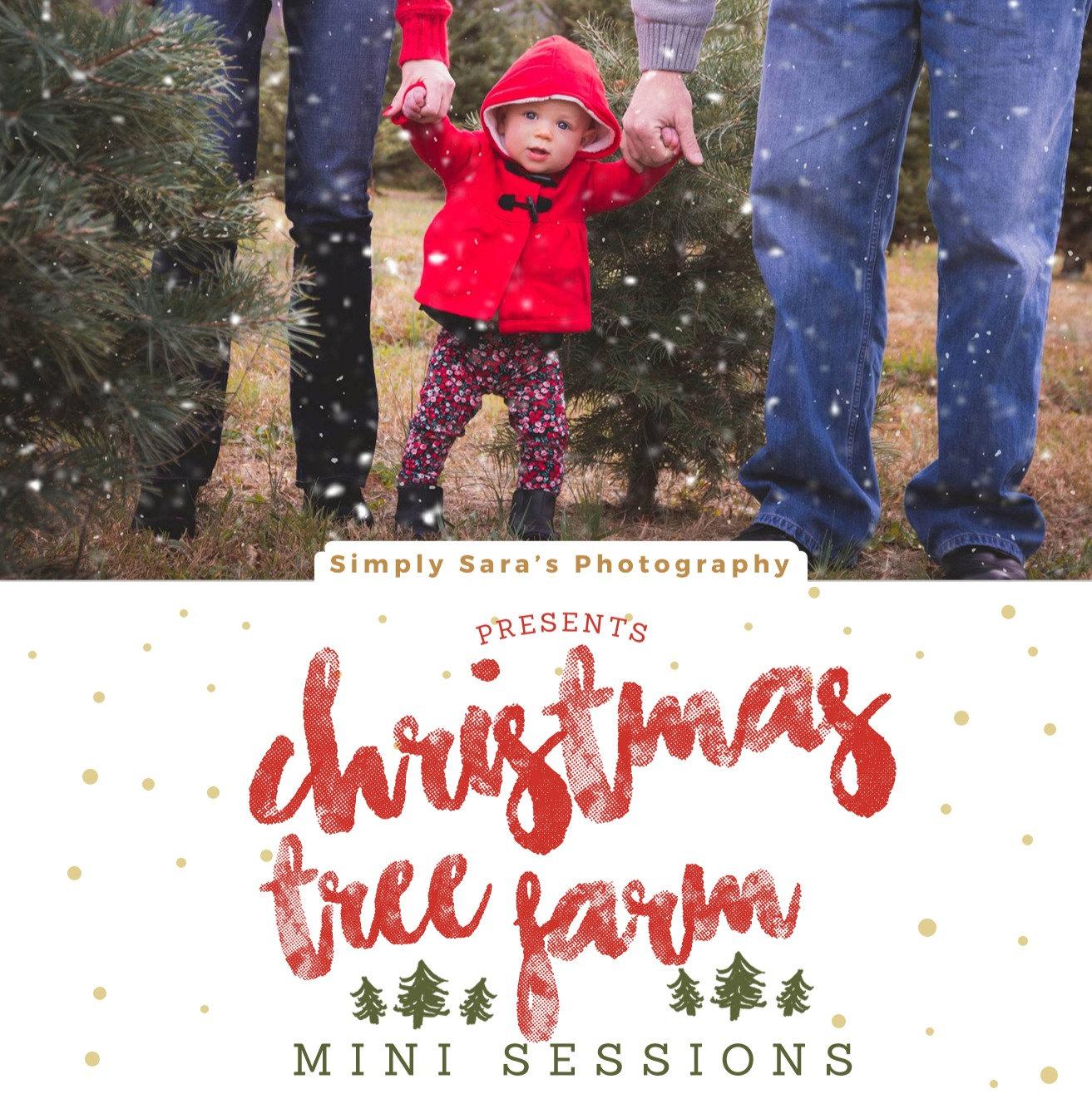Christmas Tree Farm Mini Sessions 11/28
