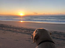 Sunrise from Bodie pup's perspective