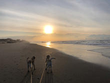 Bodie and Bailey greet the morning sun