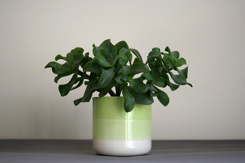 Small Planter- Green