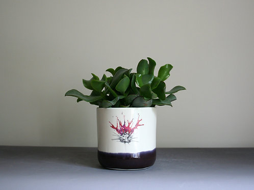 Small Thistle Planter