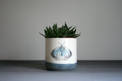 Small Planter-Navy Butterfly