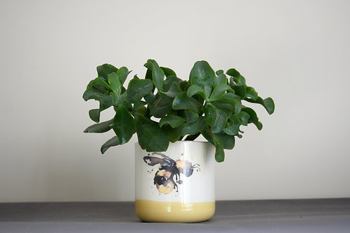 Small Bumble Bee Planter