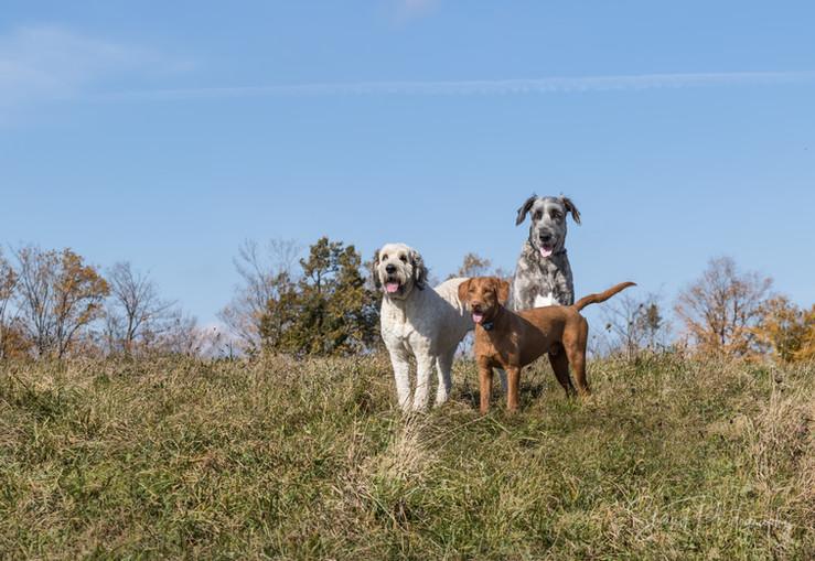 Dog Mod Squad