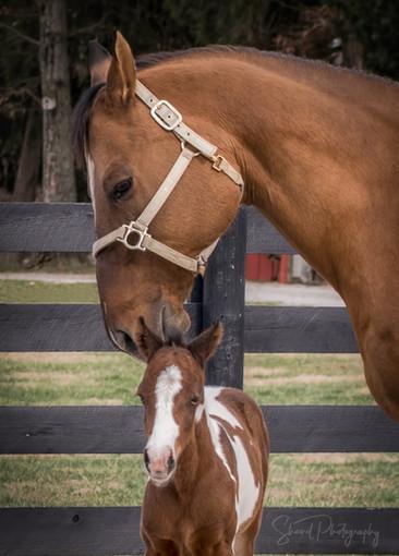 Momma horse kisses