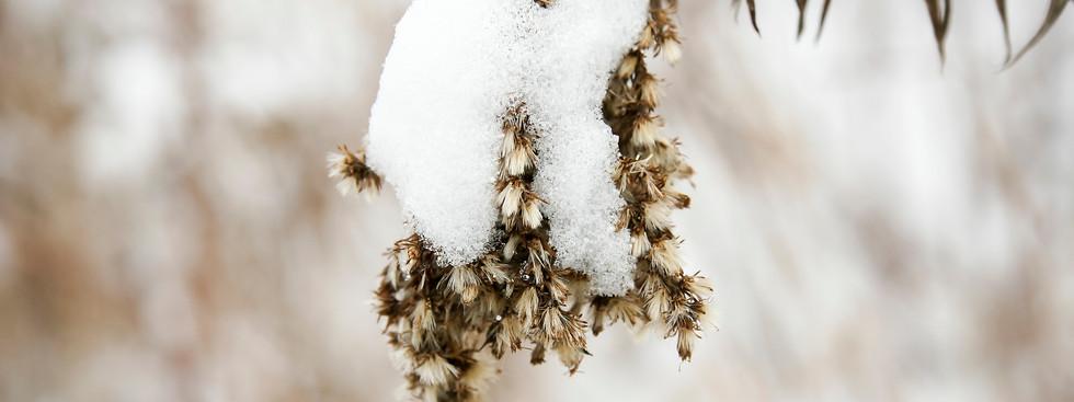 Beauty of a snowfall