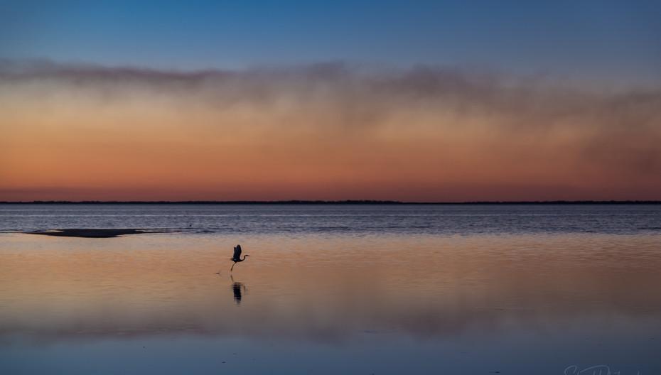 Heron Flies at Sunset