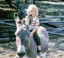 photographer, child, girl, donkey, animal, farm, fence,