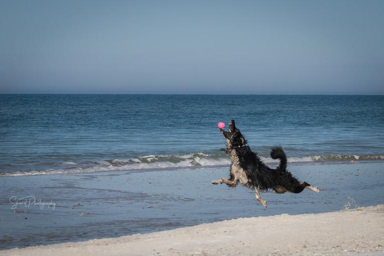 Flying high on the beach