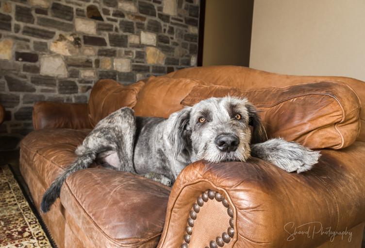 Wolfhound lounge