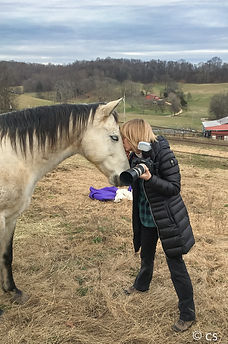 photographer and a horse