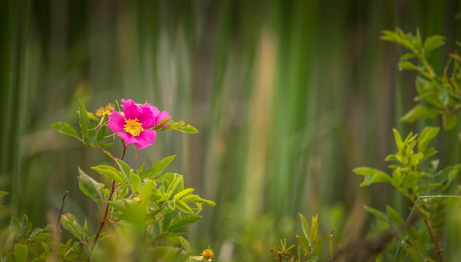 Beauty of a single flower