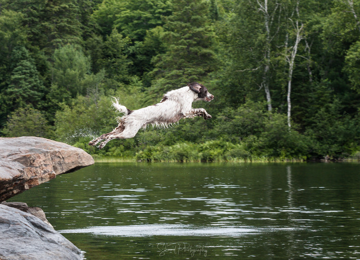 Springer Leap