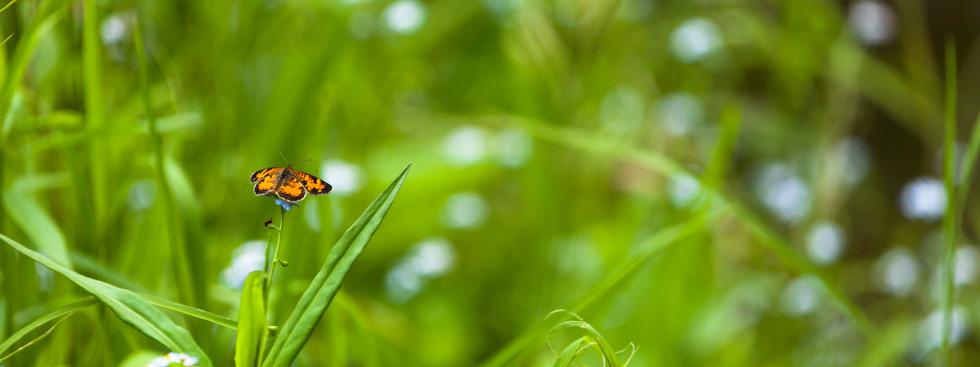 Butterfly on wet grass