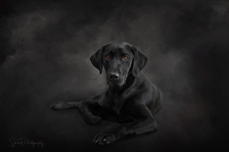 Black Dog on Black