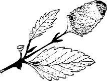 Buzz Button Botanical.jpeg