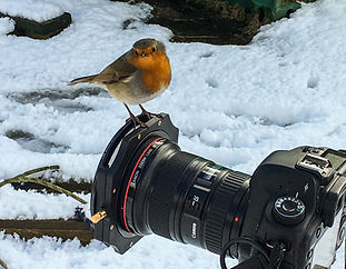cheeky robin.jpg