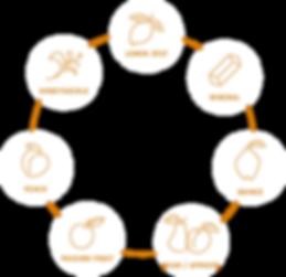 Five_XP_Our_Spirit_Bouquet_Diagram.png