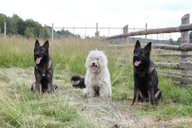 Домашняя передержка собакДомашняя передержка собак