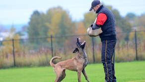 Поздравляем проводников с собаками нашего разведения со сдачей испытаний!