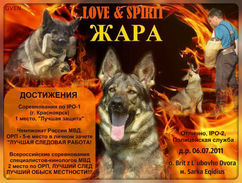 Love & Spirit Zhara