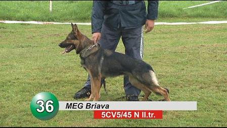Meg Briava