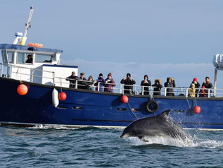 14m Passenger vessel
