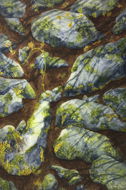 Lichen in the Tetons