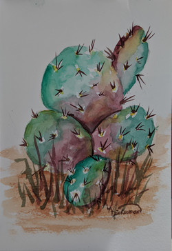Cacti Coming to Life