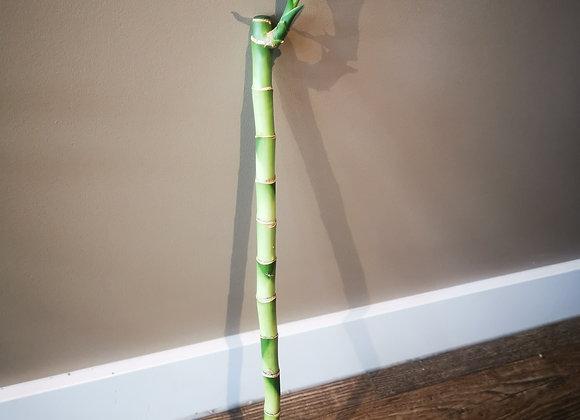 Bamboo Straight