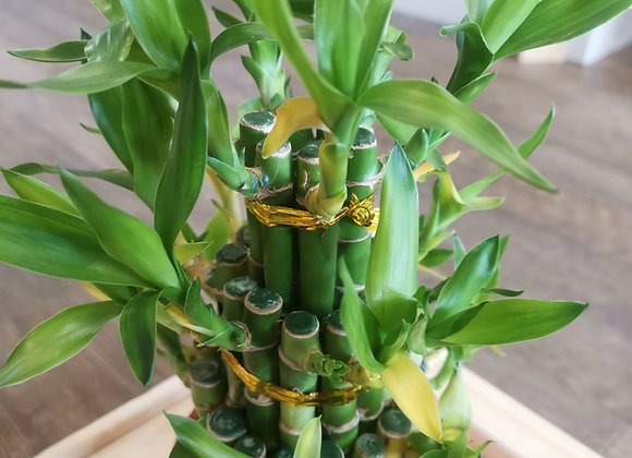 Bamboo 3 tier (Large)