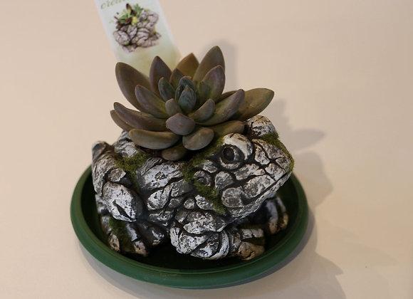 I'm a succulent! :)