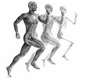 picture showing the anatomy of running