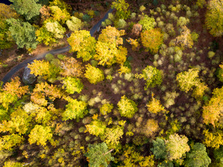 Forrest in autum color, Sweden