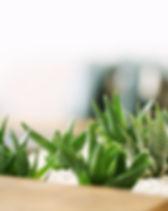 Pequeñas plantas verdes