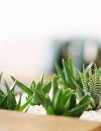 Małe rośliny zielone